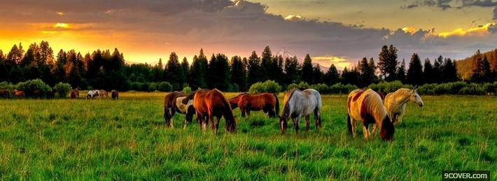 Photo Horses Facebook Cover for Free