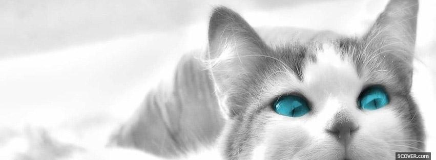 Photo Cat With Blue Eyes Facebook Cover for Free