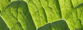 free green leaf close up facebook cover