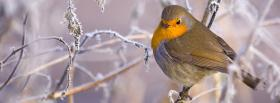winter bird animals facebook cover