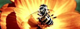 bee on a flower animals facebook cover