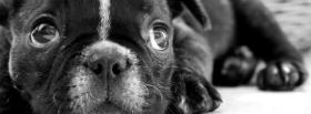free black and white puppy facebook cover