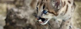cute cougar cub facebook cover