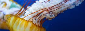jellyfish in the ocean facebook cover