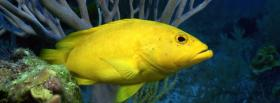 yellow underwater fish facebook cover