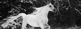 black and white horse animals facebook cover