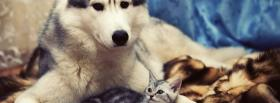 adorable animals husky and kitty facebook cover
