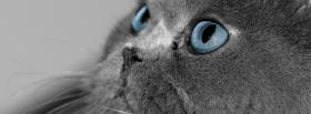 free blue eyes kitty animals facebook cover