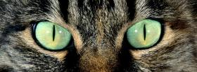 free piercing cat green eyes facebook cover