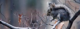 free squirrel on a branch facebook cover