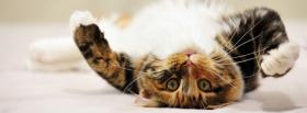 playful kitten animals facebook cover