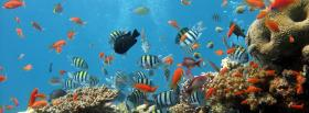 free fishes in the ocean animals facebook cover