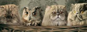 cats with owl animals facebook cover