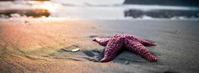 star fish on the beach facebook cover