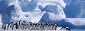 free animals population of penguins facebook cover