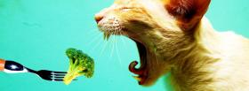 cat eating veggies facebook cover
