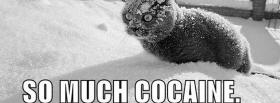 so much cocaine animals facebook cover