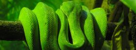 green snake around a branch facebook cover