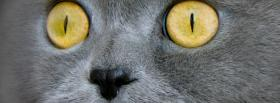 free piercing cat eyes animals facebook cover