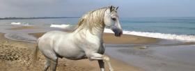 free white horse on the beach facebook cover