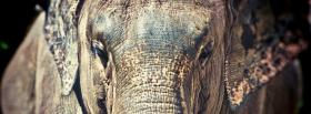 free elephant face close up animals facebook cover