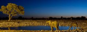 free animals girafes and elephants facebook cover