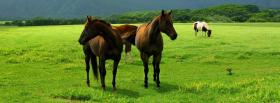 free brown horses together facebook cover