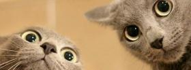 two cat faces animals facebook cover