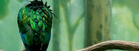 free amazing green bird animals facebook cover