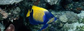 blue and yellow fish animals facebook cover