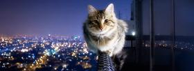 cute cat in the city facebook cover