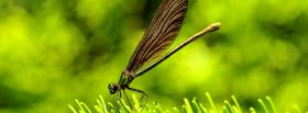 free pretty dragonfly animals facebook cover