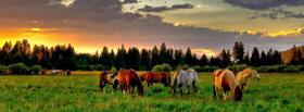 animals horses together facebook cover