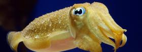 animals yellow cuttlefish facebook cover