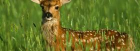 free deer in the grass animals facebook cover