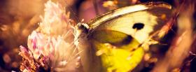 free butterfly on a flower facebook cover