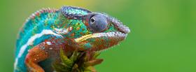 colorful chameleon facebook cover