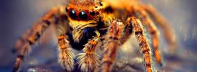 creepy spider animals facebook cover