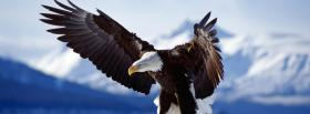 eagle flying and mountains facebook cover