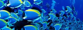 free fascinating fishes animals facebook cover