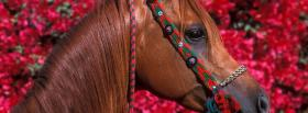 horse and pink flowers facebook cover
