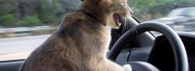 kitty driving animals facebook cover