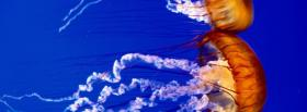 free sea nettles in the ocean facebook cover