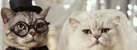 getting married cats animals facebook cover