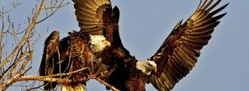 two bald eagles facebook cover