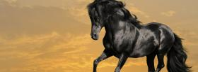 free beautiful black horse facebook cover