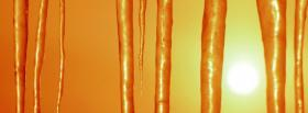 free icicles in the sun facebook cover
