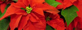 free nature beautiful flowers facebook cover