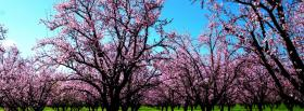 free nature lovely valley of trees facebook cover