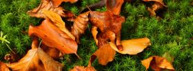 nature leaves in autumn facebook cover